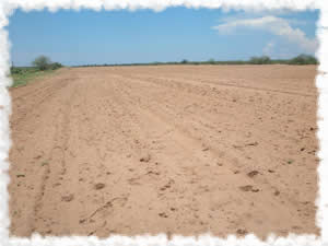 2009 Sesame Field